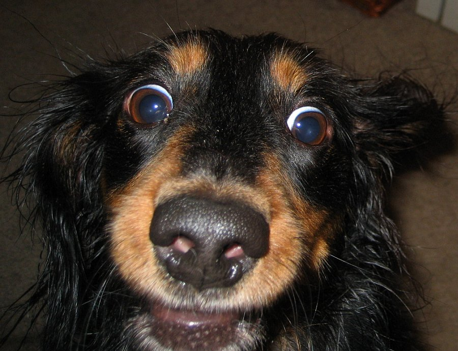 Dog with wide eyes, to say the least.