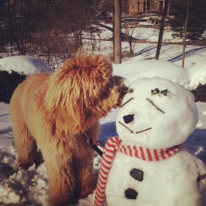 An irrelevant photograph of my dog Lennon and a snowman. Cheers.